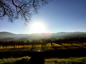 Sunset in Napa Valley