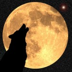 Howling at the Wolf Moon